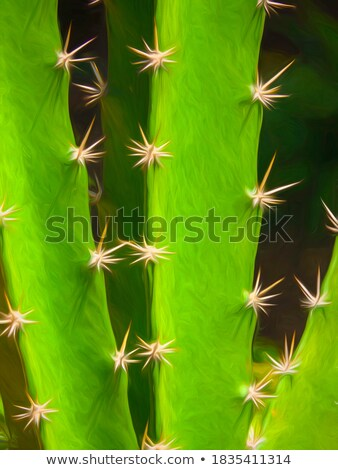 cactus with spines Stock photo © RuslanOmega