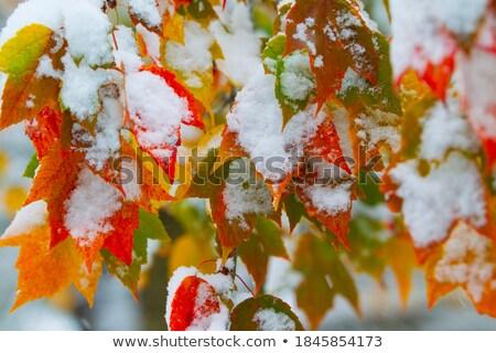 Sturm · Herbstlaub · Frau · Hand · Augen · Natur - stock foto © balefire9