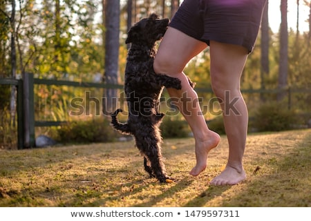 female legs and dog stock photo © cookelma