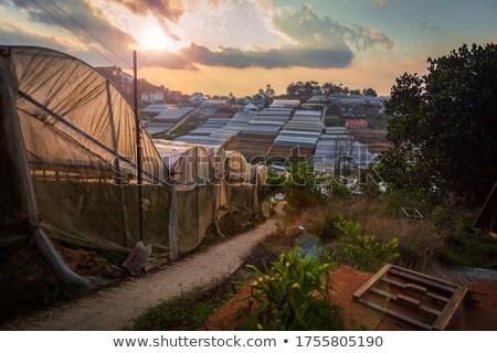Foto stock: Hierba · agradable · iluminado · hermosa · puesta · de · sol · naturaleza