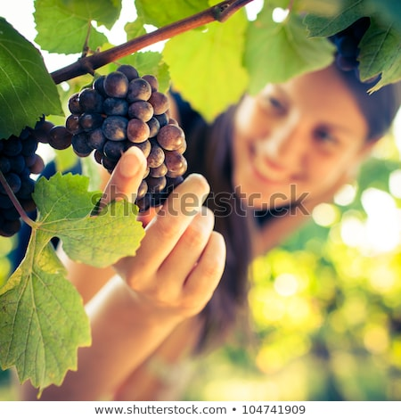 Woman inspecting green grapes in a vineyard Stock photo © photography33