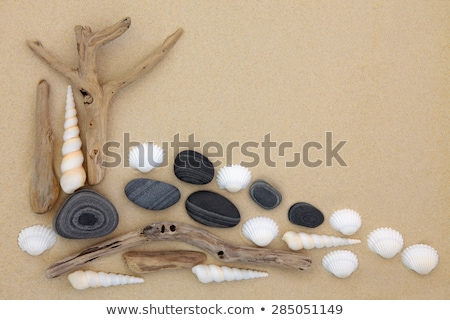 Driftwood on pebble beach Stock photo © AlessandroZocc