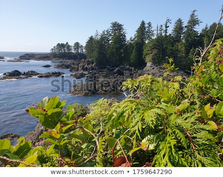 Stock photo: Wild Pacific Trail