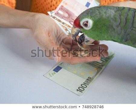 Vicces papagáj üzletember rajzfilmfigura izolált fehér Stock fotó © RAStudio