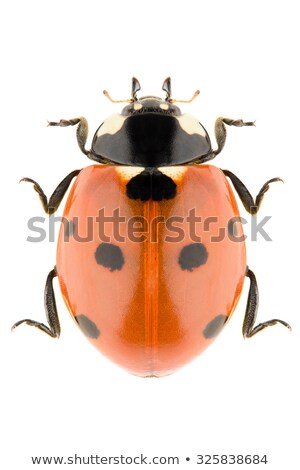 Stock photo: Collection of Seven-spot ladybirds