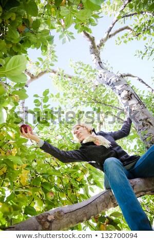 Ragazza seduta melo ramo mele alimentare Foto d'archivio © aetb