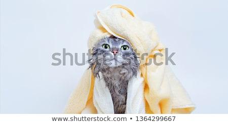 Stock fotó: Macska · mosás · kép · űr · fehér · kiscica
