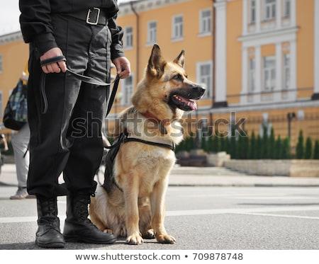 Politie hond politieagent vergadering veiligheid werken Stockfoto © wellphoto