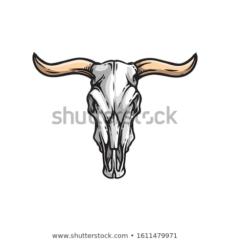 Wild Bull with the Long Horns Stock photo © HunterX