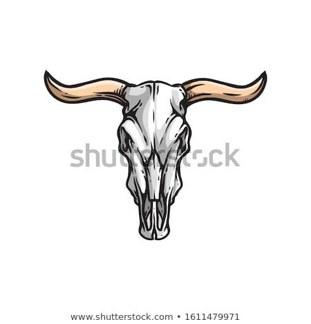 wild · stier · lang · zwarte · hoorn - stockfoto © HunterX