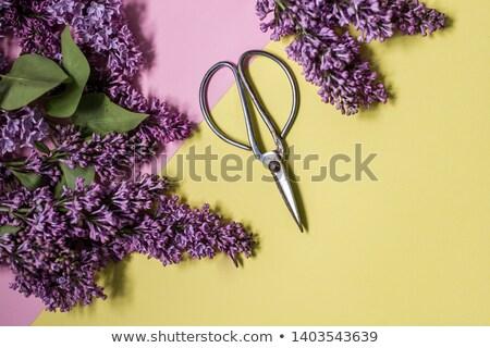 expert concept purple vintage design stock photo © tashatuvango