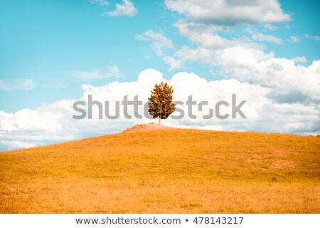 Yalnız ağaç alan Toskana İtalya bahar Stok fotoğraf © fisfra