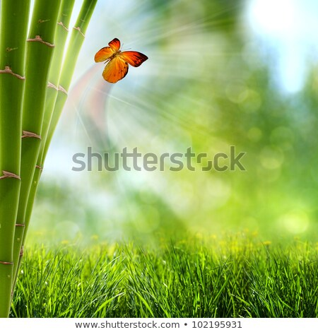 Foto d'archivio: Butterflies And Bamboo