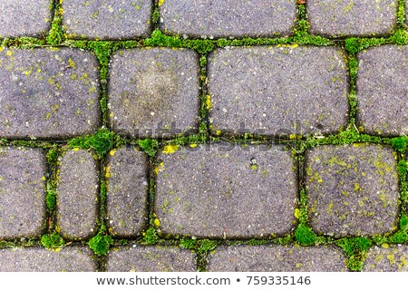 The paving stones overgrown with grass. Stock photo © master1305