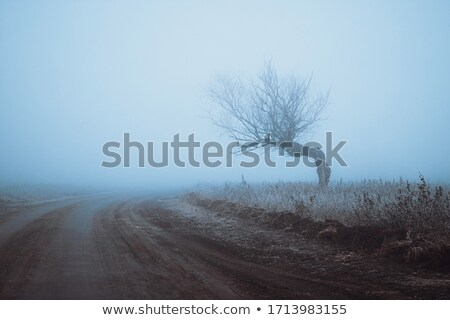 Lonely tree in the mist stock photo © Kotenko