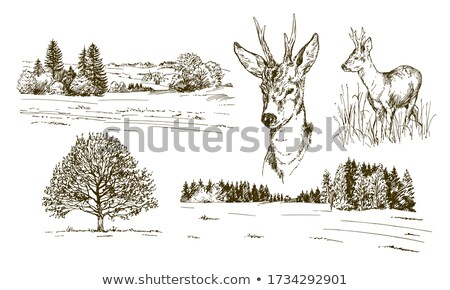 herd of roe deers on agricultural field stock photo © taviphoto