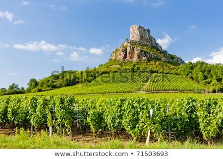 Solutre Rock with vineyard, Burgundy, France Stock photo © phbcz
