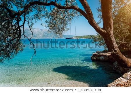 Olijfboom boot oceaan kustlijn Blauw Geel Stockfoto © compuinfoto