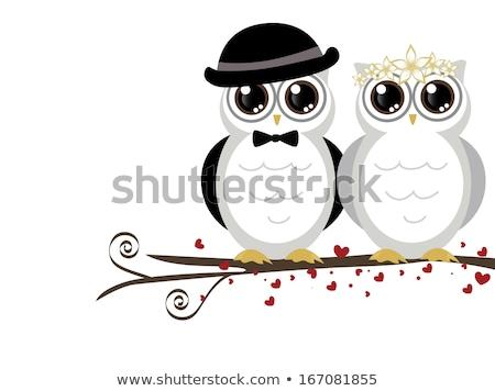 Wedding owls Stock photo © adrenalina