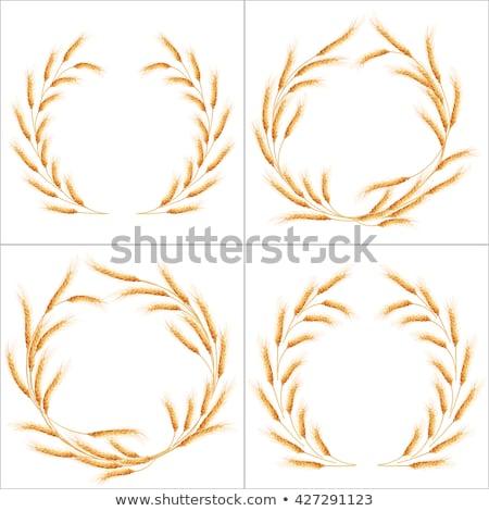 vektör · ayarlamak · ayrıntılı · eps · kafatası - stok fotoğraf © beholdereye