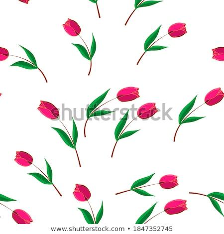 groene · naadloos · textuur · tulpen · voorjaar · achtergrond - stockfoto © beholdereye