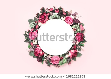 Branco quadro tenro rosa rosas Foto stock © TasiPas