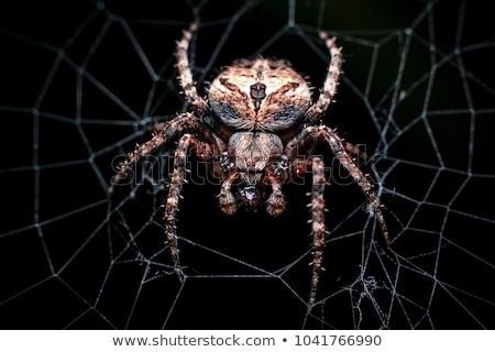 Rovar pók közelkép akasztás háló természet Stock fotó © OleksandrO