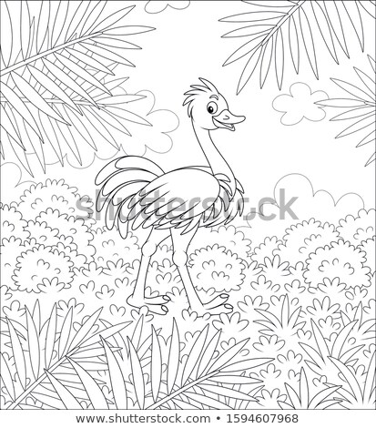 ostrich walking in the grass in black and white stock photo © simoneeman