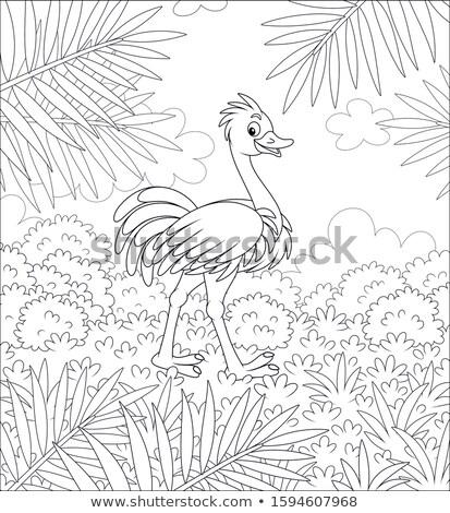 Autruche marche herbe blanc noir parc Afrique du Sud Photo stock © simoneeman
