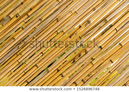 Secar bambu árvore cerca parede original Foto stock © stevanovicigor