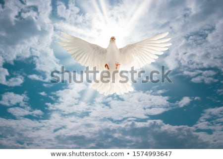 white dove in dramatic sky stock photo © pashabo