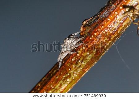 Yukarı sarı örümcek Bina web yeşil Stok fotoğraf © frimufilms
