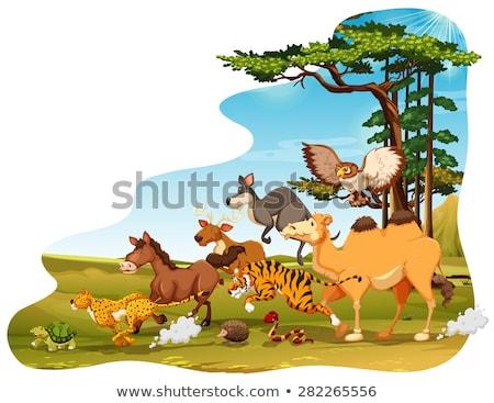 Sahne deve baykuş alan örnek doğa Stok fotoğraf © bluering