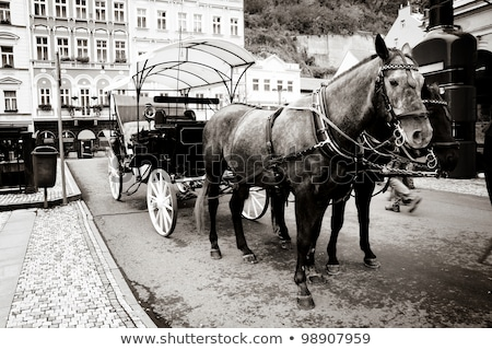 ヴィンテージ · 一人乗り二輪馬車 · 動物 · タクシー · 美しい · ウイーン - ストックフォト © 5xinc