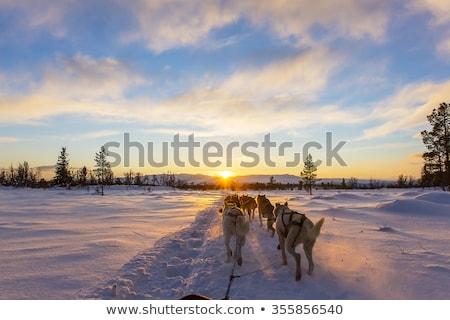 lány · kutya · pózol · hó · gyönyörű · örömteli - stock fotó © is2