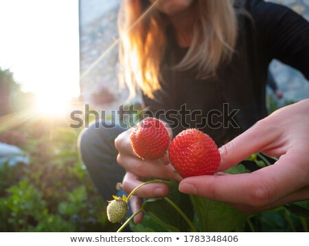 fraise · image · joli · fille · ouvrir - photo stock © is2