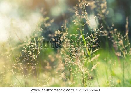 Close-up of defocused light Stock photo © wavebreak_media