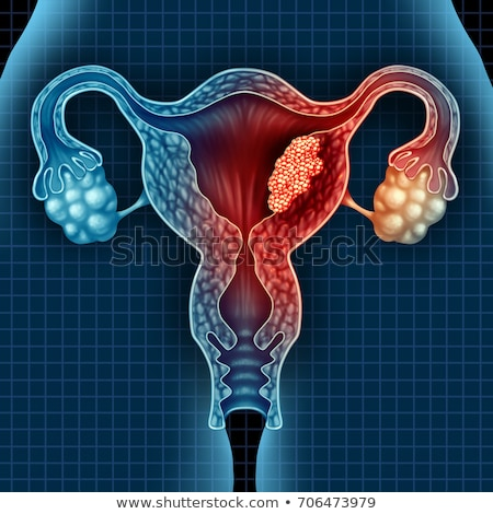 Female Reproductive System on White Background Stock photo © bluering