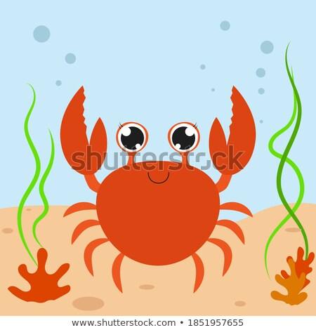 Shell isolated. Underwater world fauna Vector illustration Stock photo © popaukropa