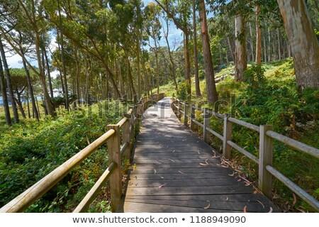 ビーチ 木材 滑走路 島 空 太陽 ストックフォト © lunamarina