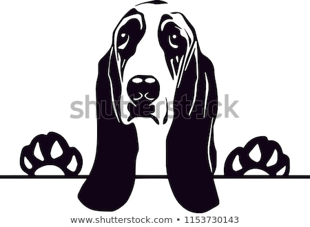 jachthond · puppy · hond · triest · witte - stockfoto © cthoman