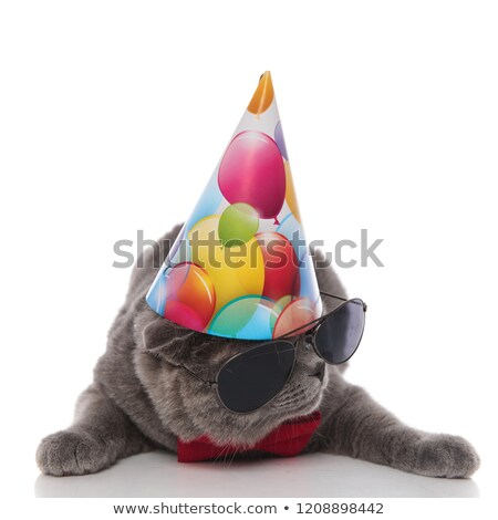 cool grey gentleman cat with birthday hat looks to side Stock photo © feedough