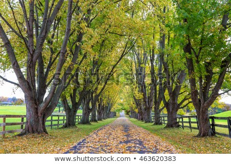 tree lined driveway to rural farm land stock photo © lovleah