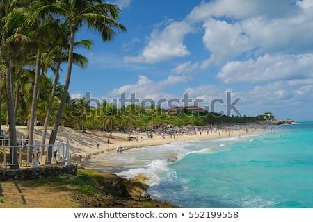 caribbean coconut palm trees in tuquoise sea stock photo © lunamarina