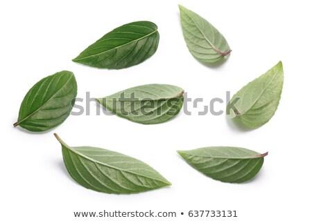 Thai Holy Basil single fresh leaves, paths Stock photo © maxsol7