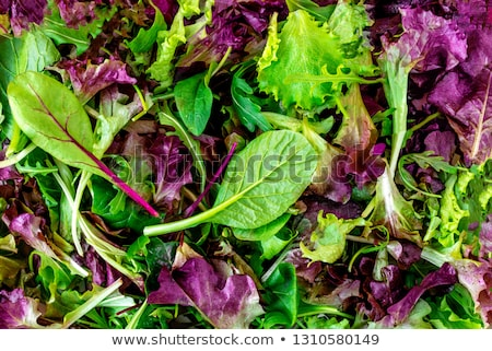 Green food background with salad leaves mix Сток-фото © furmanphoto