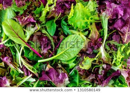 Green food background with salad leaves mix Сток-фото © furmanphoto