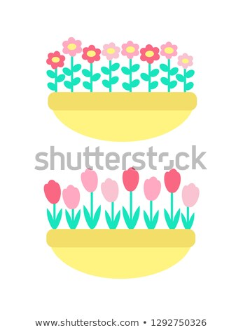 daisies grown in clay pot vector spring flowers stock photo © robuart