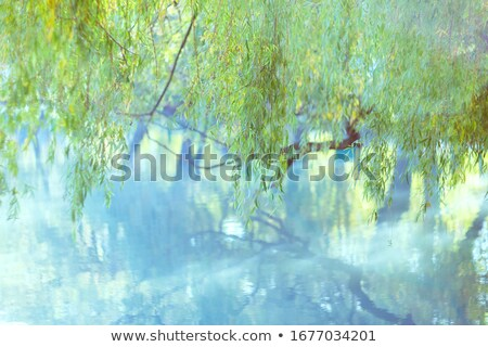 river with blue water and green trees stock photo © vapi