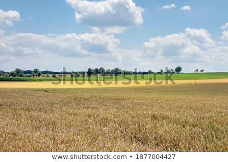 Vidéki díszlet mezőgazdasági déli Németország fa Stock fotó © prill